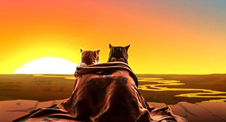 gatos mirando un amanecer