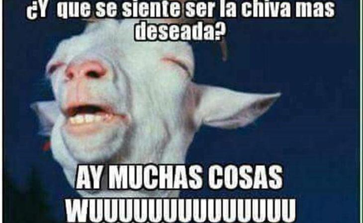 meme chiva