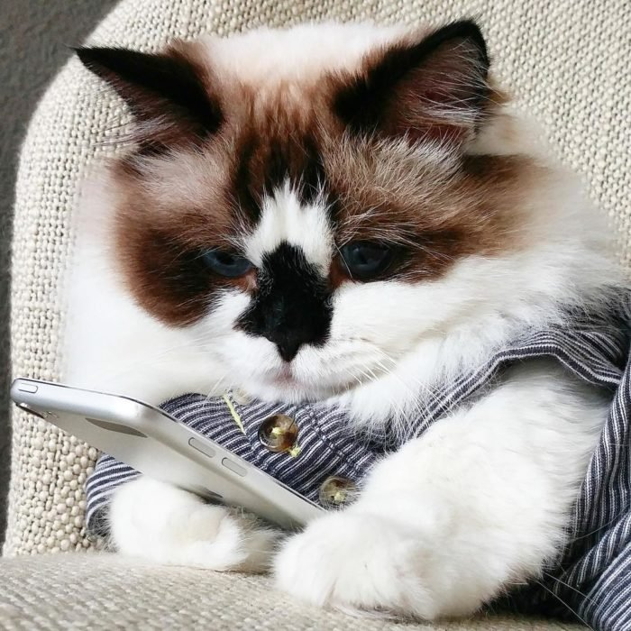 gato revisando su celular