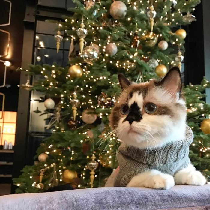 gato con suéter gris