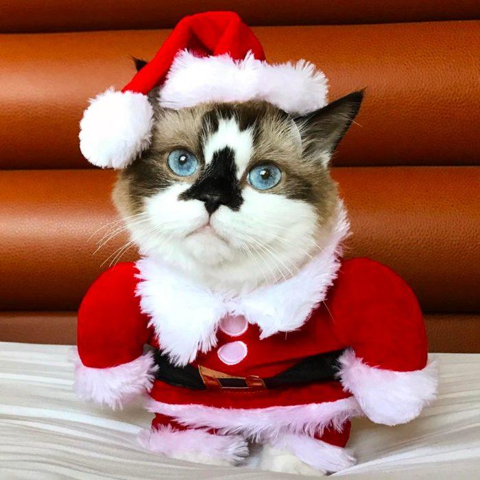 Gato vestido de santa claus