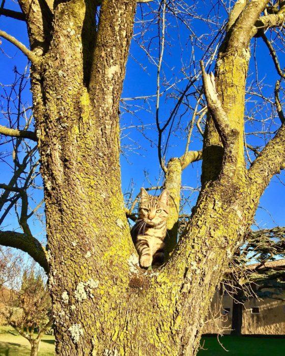 gato camuflado en un árbol