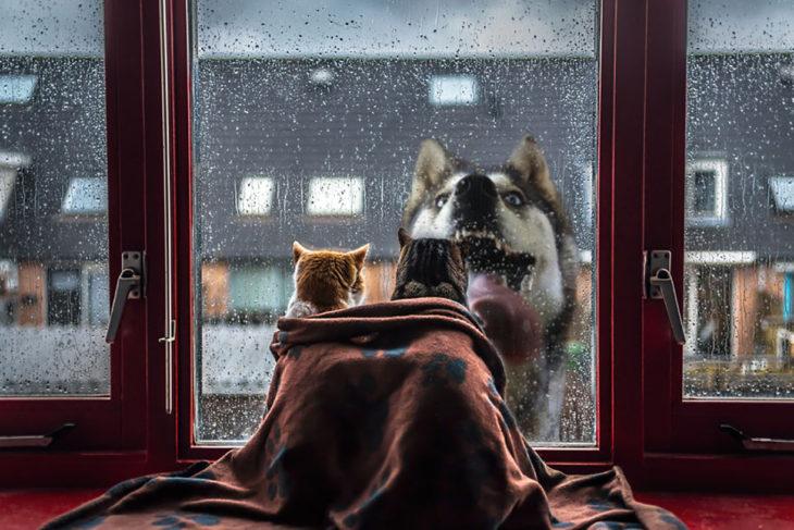 gatos en interior ven a través de una ventana a un perro en el exterior