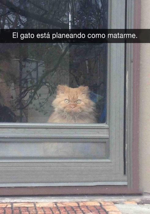 gato detrás de una puerta de vidrio