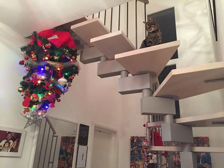 gato en escaleras mira a un árbol navideño puesto boca abajo en el techo