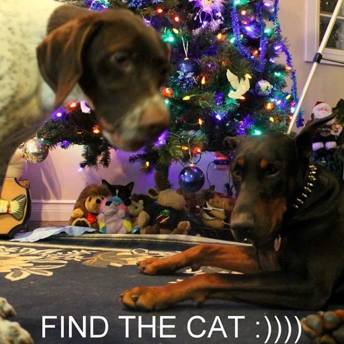 gato escondido observando a perros