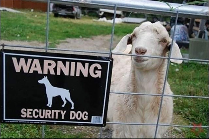 oveja tras una cerca con cartel de cuidado con el perro