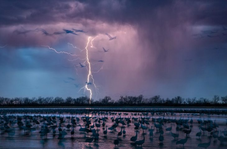 tormenta de rayos sobre río y aves