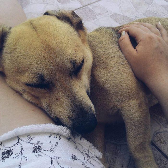 perro acurrucado en un humano