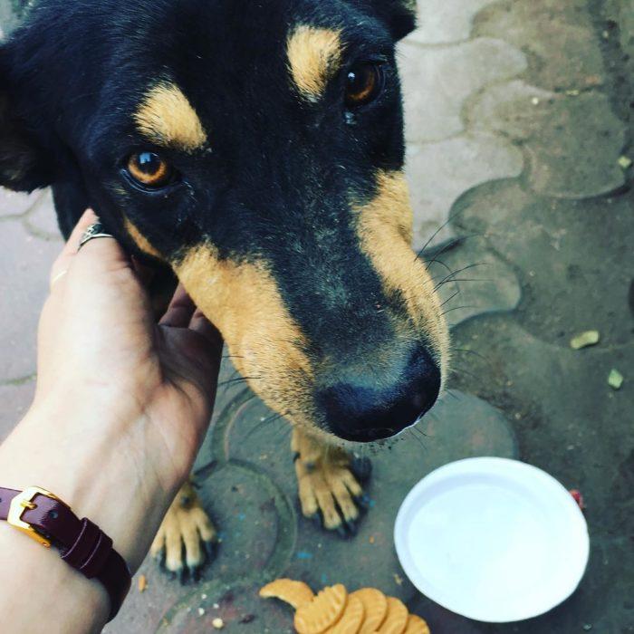 perro con mirada agradecida mientras lo alimentan