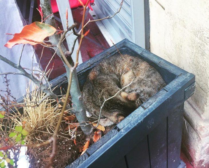 gato en una maseta