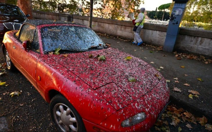 carro rojo lleno de popó de pájaro