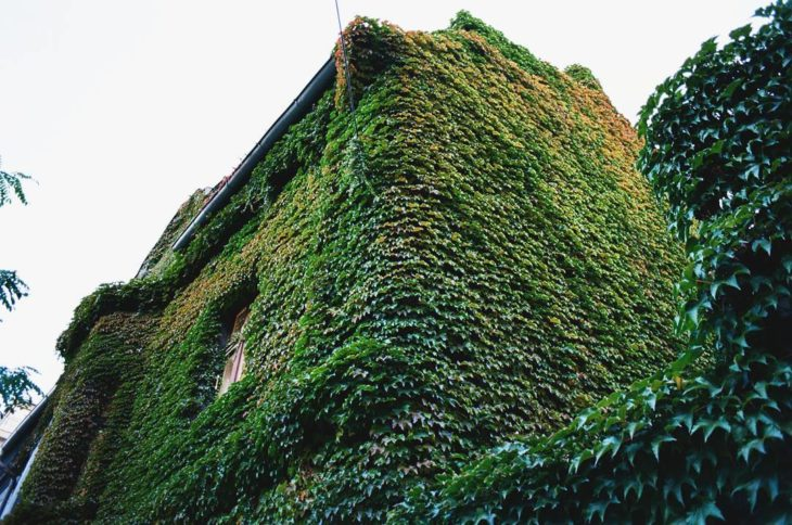 exterior de una casa cubierta por plantas