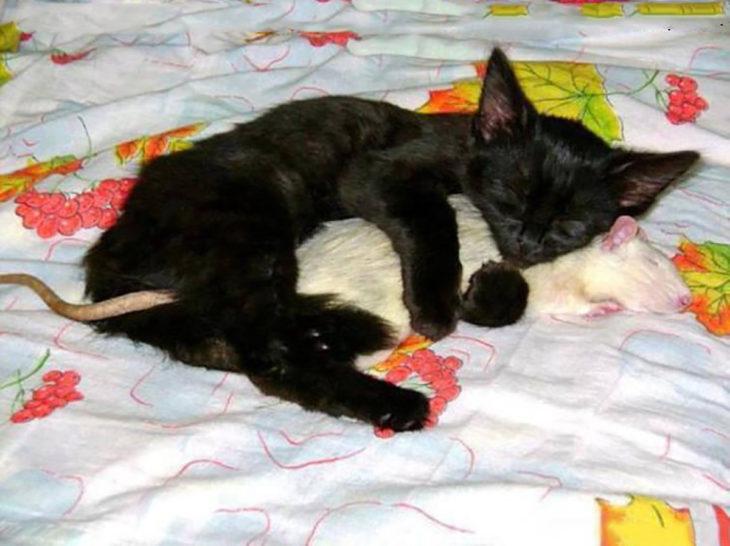 gato abrazando a un ratón