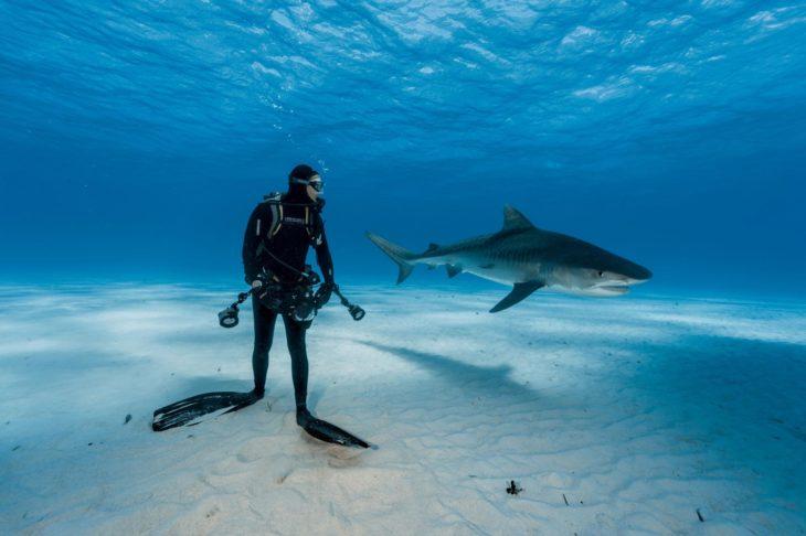buzo cerca de un tiburón
