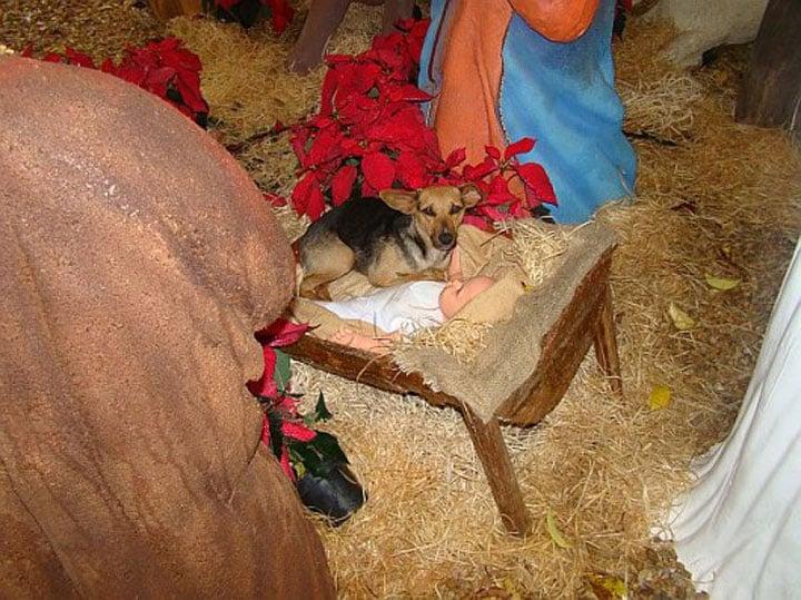 perrito en un pesebre navideño