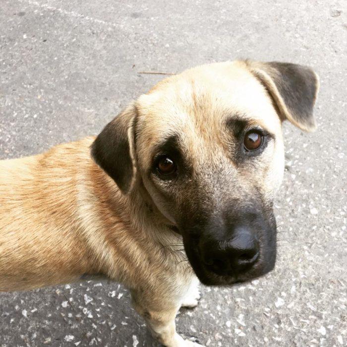 mirada tierna de perro café