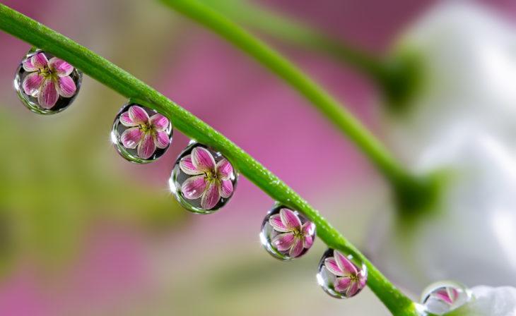 Reflejo de flor en gotas de agua