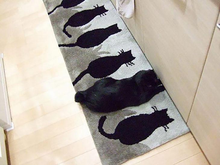 alfombra d egatos negros y gato negro real