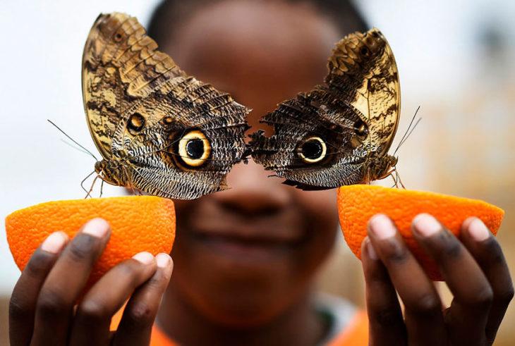 niño posa con mariposas