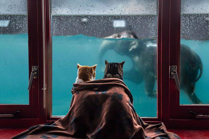 dos gatos mirando a través de la ventana a un elefante nadar