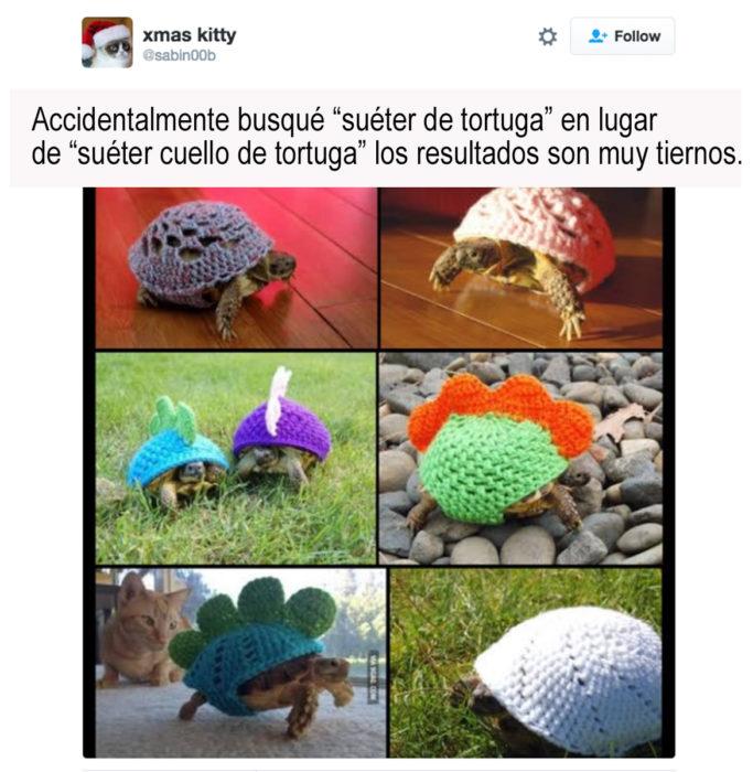 imágenes de tortugas con suéteres