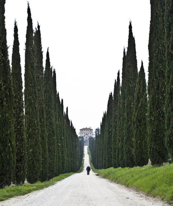 camino enmarcado por árboles