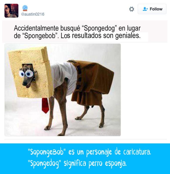 perro vestido de bob esponja