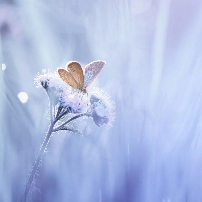 mariposa en paisaje blanco