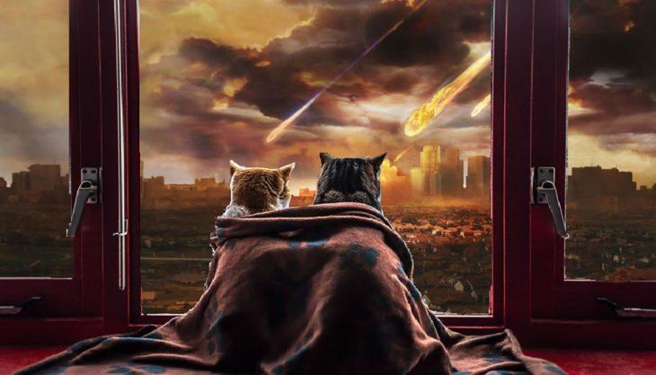 gatos mirando desde una ventana asteroides caer