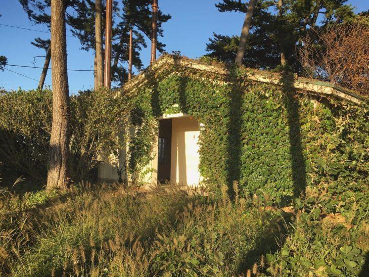 casita con paredes cubiertas de plantas