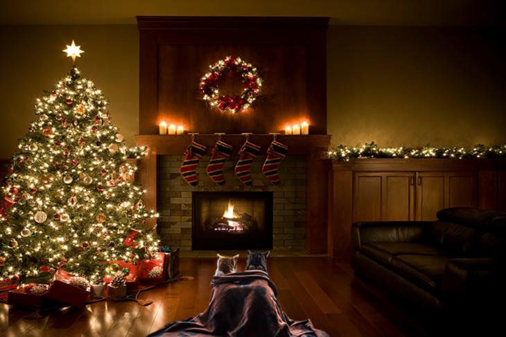 dos gatos con una manta frente a una chimenea al aldo de un árbol de navidad