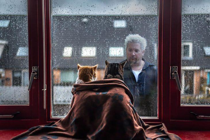 gatos miradndo tras la ventana a un hombre mojarse