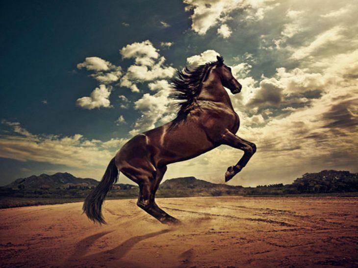 caballo español negro