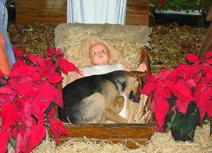 perro en un pesebre de navidad