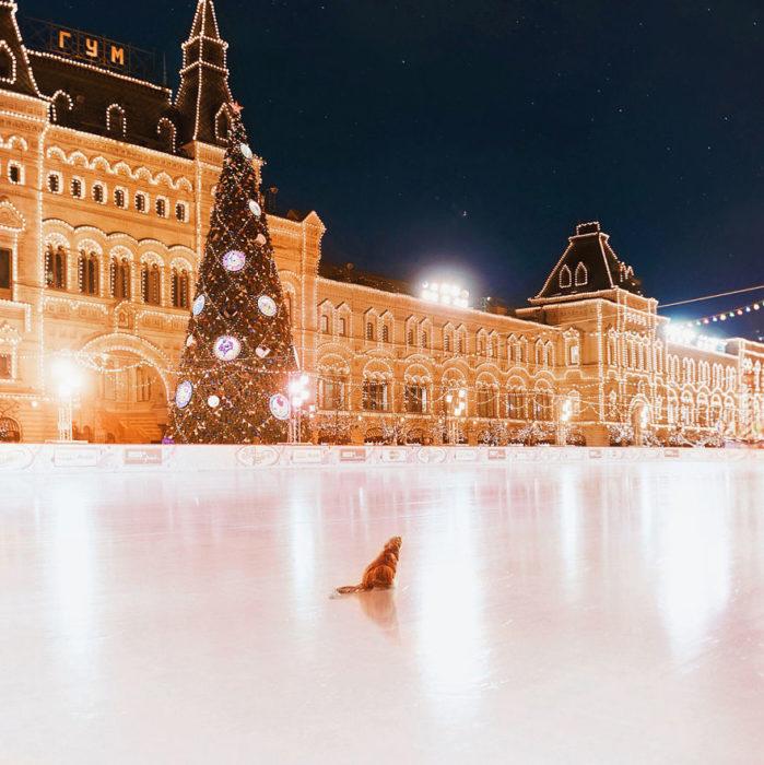 gato en una pista de hielo