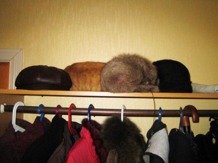 gato camuflado con gorras