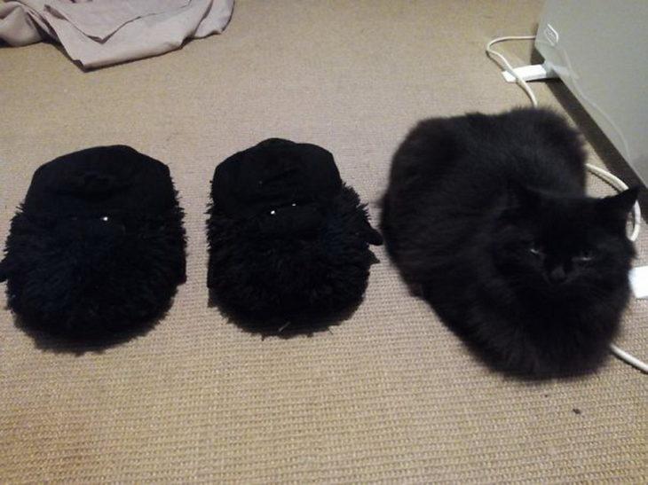 gato camuflado con pantuflas