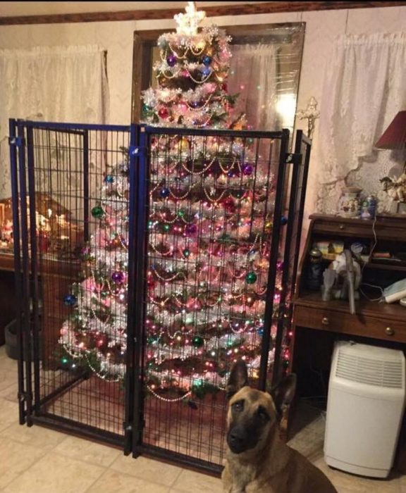 perro frente a árbol navideño encerrado en una reja