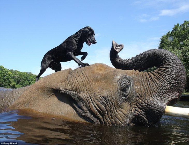 Perro y elefante jugando juntos