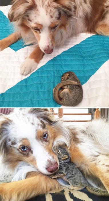 perro con su amigo