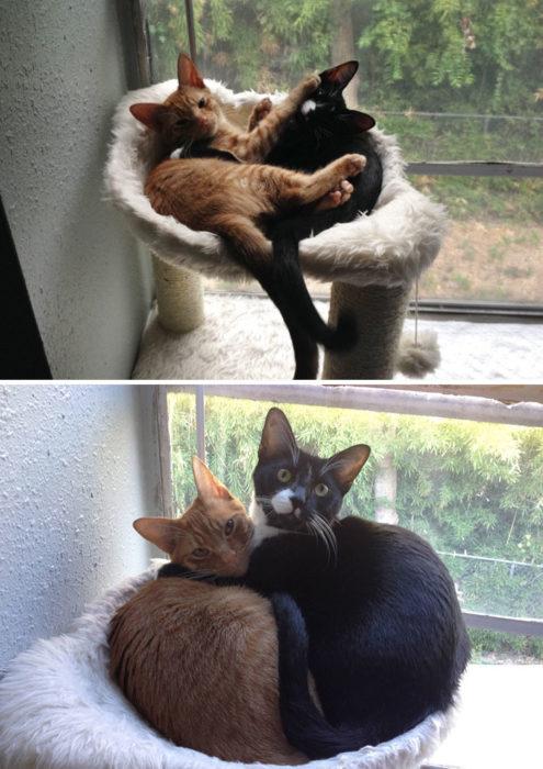 gatos no caben en su juego