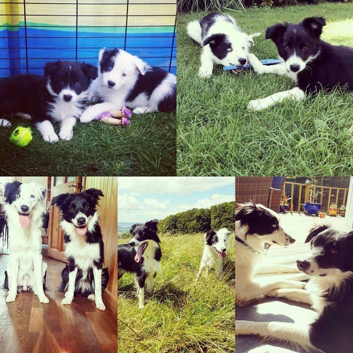 dos perros como han crecido