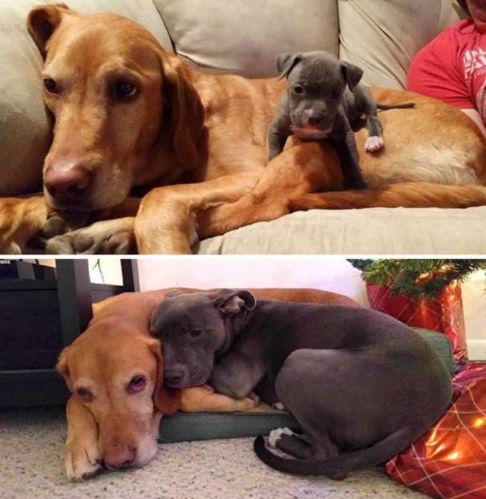 perros juntos de chicos y ahora de grandes
