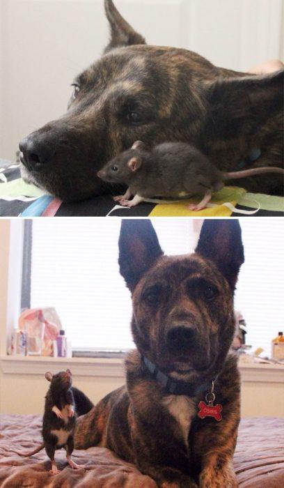 perro y ratita de chiquitos y de grandes