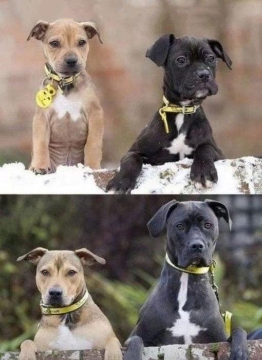 perritos de chiquitos y de grandes