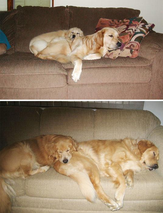 perritos que siguen durmiedo juntos