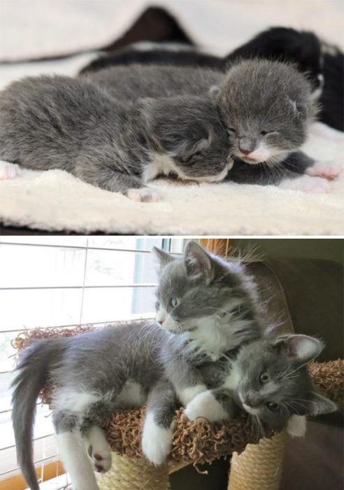 doss gatitos juntos