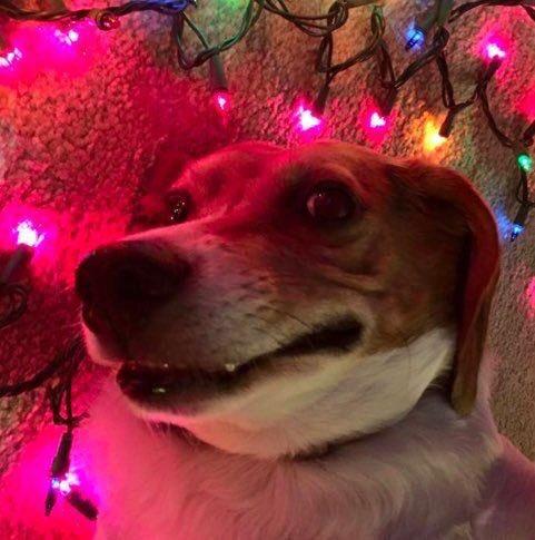 Perro sonriendo acostado al lado de las luces navideñas