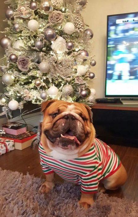 perro con sueter de navidad sonriendo a la camara